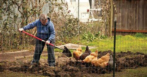 starting a vegetable garden from scratch starting a vegetable garden from scratch