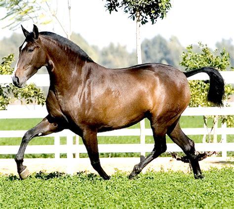 potros cojiendo yeguas sexo animal caballo viola a yegua caballos cojiendo