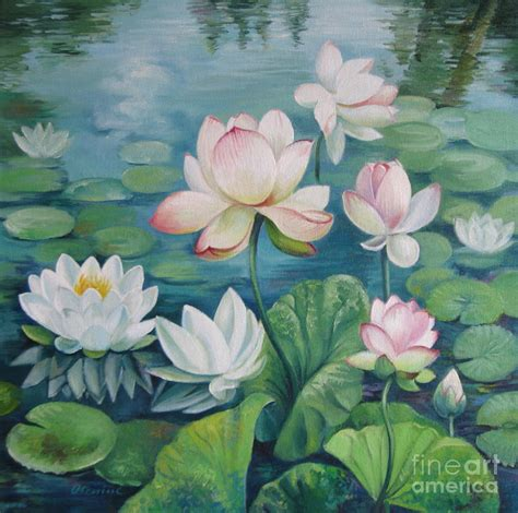 lotus flowers by oleniuc