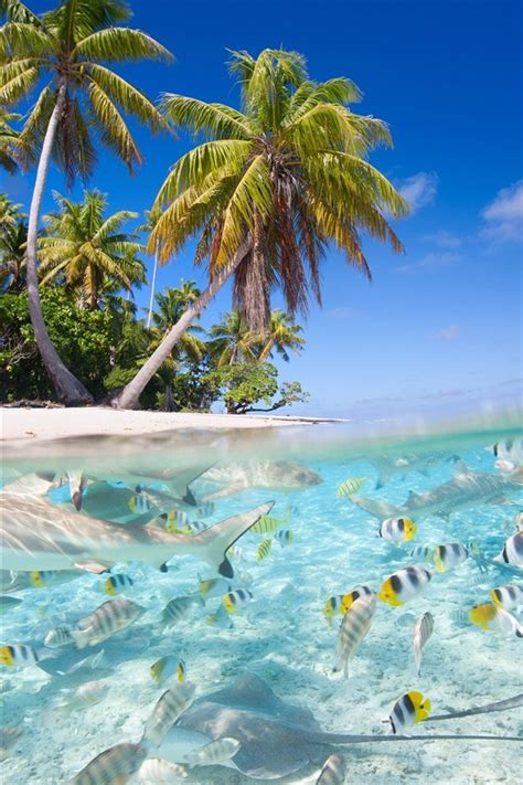 wallpaper tropical scenery sea beach palm trees fish sharks  hd picture image