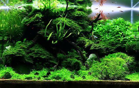 Aquascape Moss by Tobias Coring And Aquascaping Aqua Rebell
