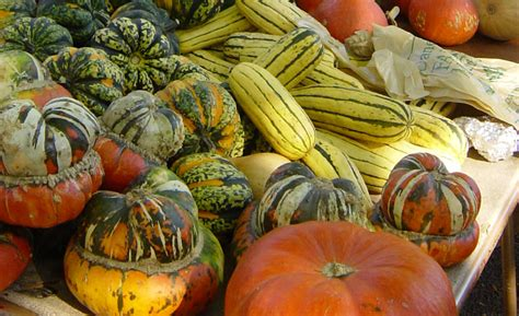 fall vegetables reductress 187 5 tasty fall vegetables you must not eat for