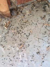 mouse droppings found in garage in pepper pike