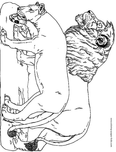 tiger family coloring page lion family coloring pages