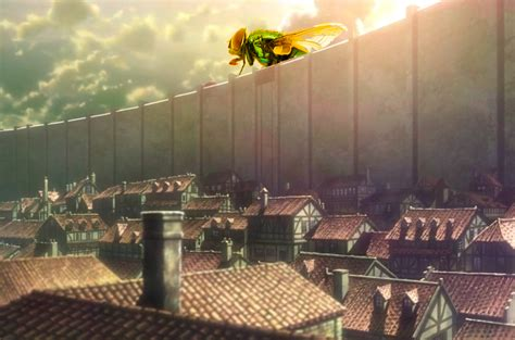 attack on house fly adopting heroic anime traits to