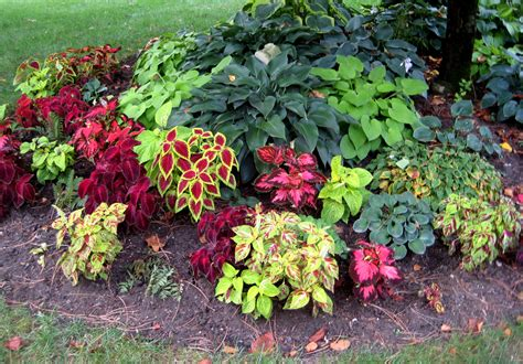 Flowers For Shade Garden Small Flower Bed Ideas Here Is A Closer Look At The Coleus And Hosta Planted The Tree