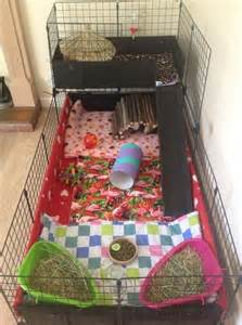 Guinea Pig Hutch Pets At Home New Owner Advice What To Buy Feed And Everything Else
