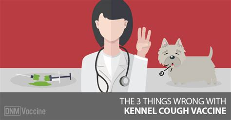 side effects of vaccinations bordetella updated three critical problems with the kennel cough vaccine and what you need to