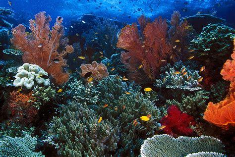 blogganeh pemandangan bawah laut  indah