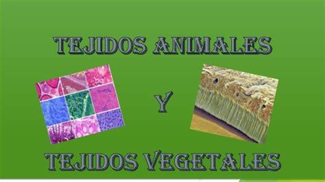 tejidos animales y vegetales biologia tejidos animales y vegetales