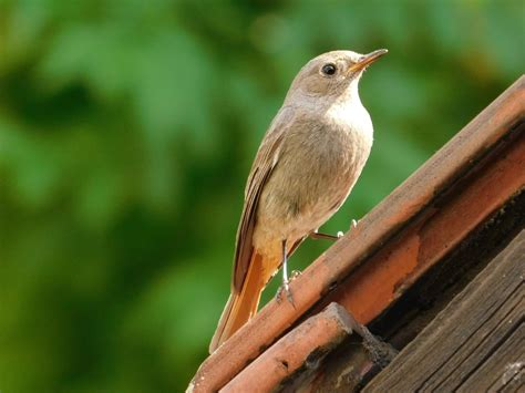how to keep birds porch news for growers businesses avian