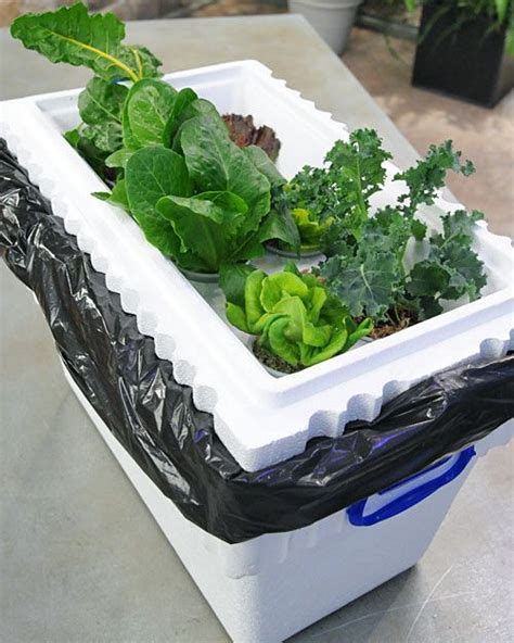 how to build a hydroponic vegetable garden 34 best aeroponics hydroponics images on