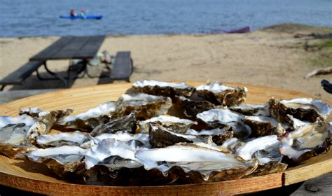 tomales bay boat rental oyster tours catered trips blue waters kayaking point