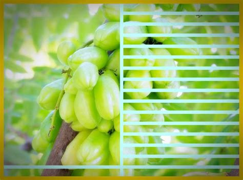 kumpulan nama jenis tanaman  manfaatnya  kesehatan
