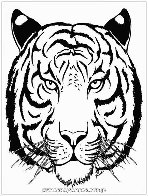 Contoh Gambar Gambar Mewarnai Hewan Harimau - KataUcap