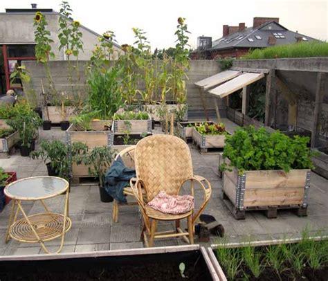 orti in terrazzo orto sul balcone guida completa