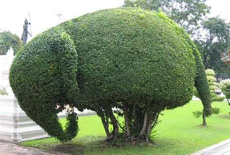 elephant topiary 301 moved permanently