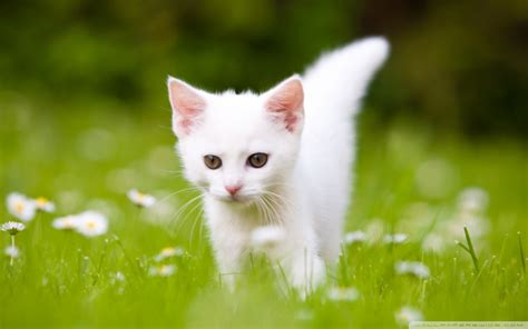 Kittys New Do by Top 32 Lovely And Wallpapers Simplefreethemes
