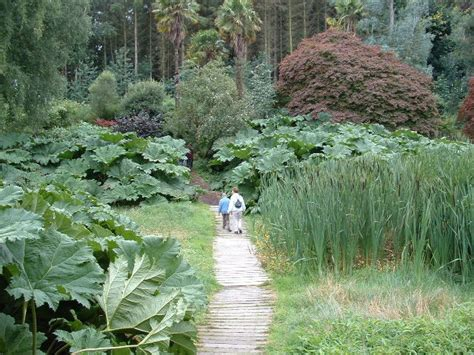 The Bog Garden by Bog Garden 169 Chris Shaw Cc By Sa 2 0 Geograph Britain And Ireland