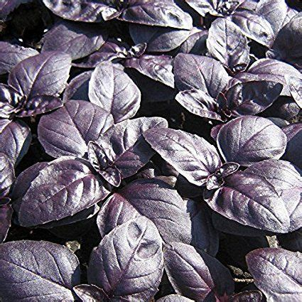 best seed company 40 best herbs jung seed company images on