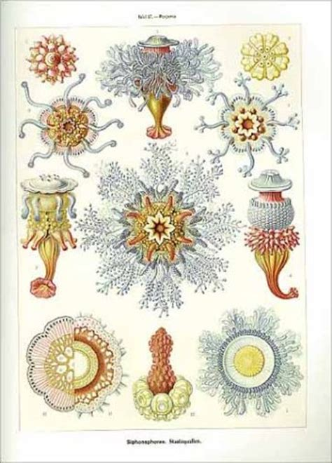 art forms in nature 3791319906 art forms in nature the prints of ernst haeckel ernst haeckel olaf breidbach iren 228 us eibl