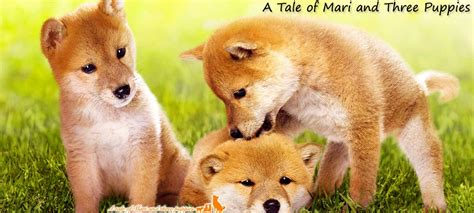 a tale of mari and three puppies a tale of mari and three puppies 2007 ආදරණ ය බල පව ල