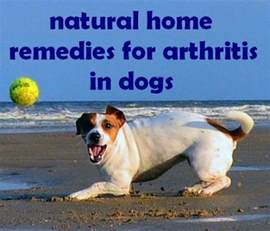 hip dysplasia home treatment arthritis in dogs treatment home remedies