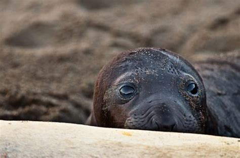 Seal Beat Idiot Beat Up Seals