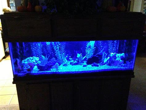 marineland aquatic plant led light with timer marineland freshwater plant led light pics
