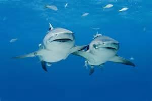 Film met de focus op begrip voor de haaien en behoud van deze dieren