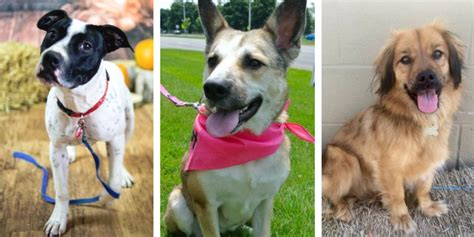 last day rescue 10 great places to adopt a in southeast michigan puppy leaks