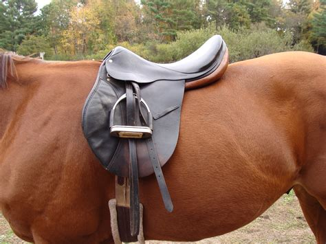 horse saddle is your horse an off the shelf fit equine ink