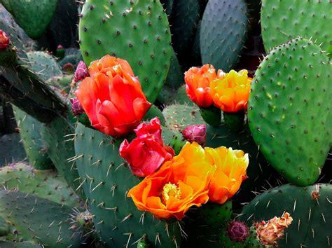 Batu Lukis Cactus 1 kaktus kaktus yang menarik myrokan