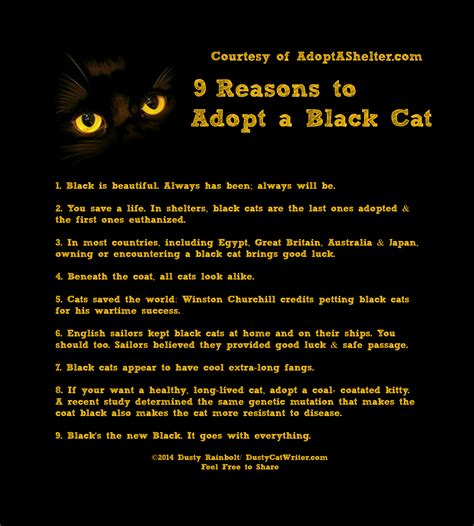 Top 10 Reasons To Adopt A by 9 Reasons To Adopt A Black Cat Dusty Rainbolt S Universe