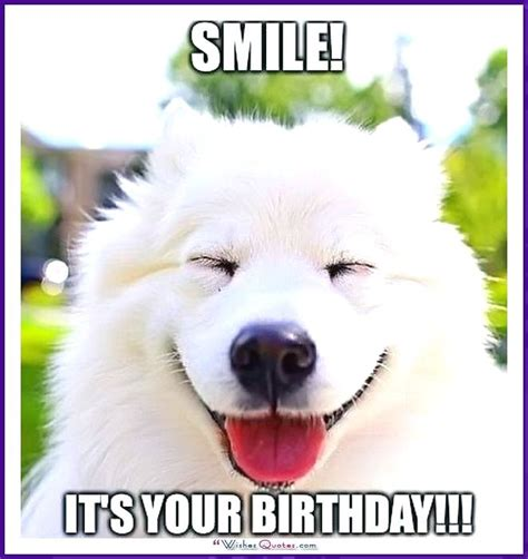 Dog Birthday Meme - happy birthday memes with funny cats dogs and cute