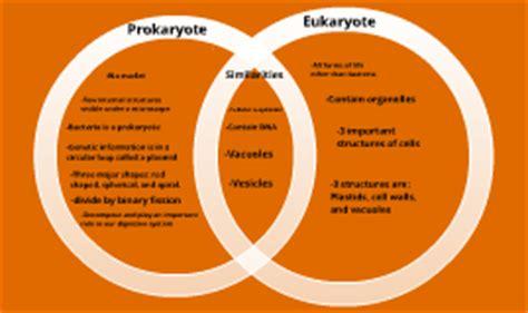 venn diagram prokaryotes and eukaryotes prokaryote vs eukaryote venn diagram by sam on prezi