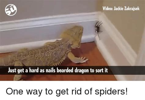 how to get rid of lizard in my room bearded memes of 2016 on sizzle beard