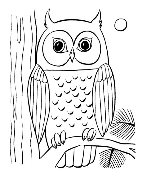 printable owl to color owls animal coloring pages pictures