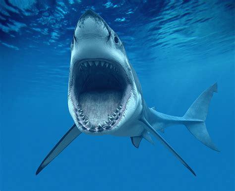 kumpulan berbagai gambar ikan hiu