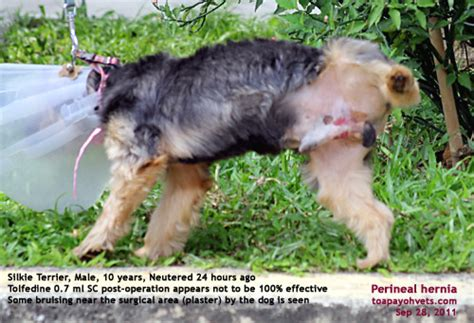 how will my be in after neutering 20100619dental scaling health care problems in singapore dogs fistula oronasal dog