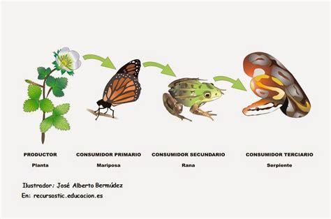 cadenas alimenticias ejemplos con dibujos que es una cadena alimenticia imagui