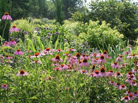 giardino farfalle giardino delle farfalle butterfly garden 187 grandi vivai