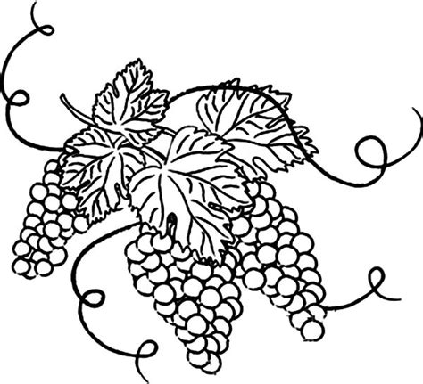 grape leaves coloring pages pin drawn grapes grape leaf 5 grape leaves coloring page