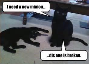 Toaster Mittens Loldamn Com Wp Content Uploads 2014 02 Funny Cat Meme I