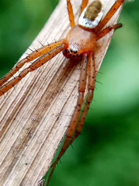 Kamera Belakang Xiaomi Redmi Note 3 Original New macro monsters spider araneidae 3 original
