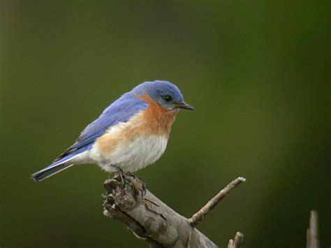 birding information