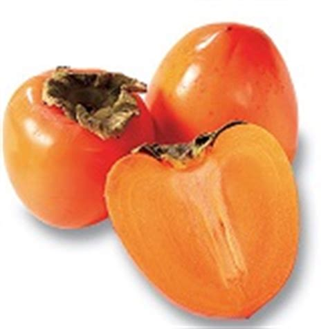 can dogs eat persimmons can dogs eat persimmons about doggies
