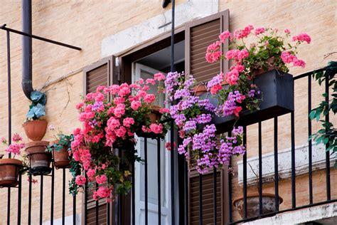 giardino sempre fiorito balcone sempre fiorito piante