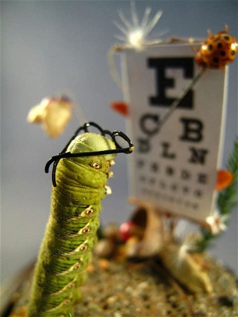 woods l eye exam 17 best images about bugs life on pinterest miniature