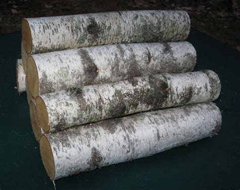 Decorative Wood Logs For Fireplace by 6 Decorative Maine White Birch Logs By Oldandnewtiques
